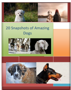 Snapshots of 20 Amazing Dogs